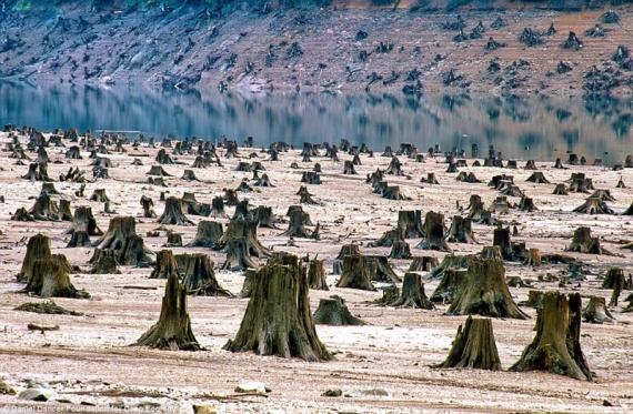 В Орегоне этот многолетний лес выпилили для строительства новой дамбы.